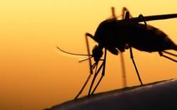 Bé nhỏ là thế, tại sao muỗi có thể đe dọa mạng sống của một nửa dân số thế giới?