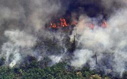 Giải thích trọn vẹn: Chuyện gì đang xảy đến với rừng già Amazon và bạn làm được gì để cứu lấy nó?