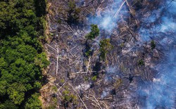 Thợ mỏ trái phép, nông dân và các nhóm khai thác tài nguyên của Brazil: Những thế lực đang âm thầm phá hủy lá phổi xanh Amazon