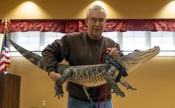 Đây là Wally - chú cá sấu chuyên chữa trầm cảm cho người già
