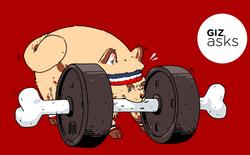 Hỏi khó: Ngoài con người ra, có loài động vật nào biết tập thể dục không?