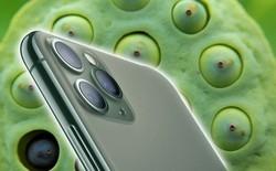 Cảnh báo: Đừng mua iPhone 11 Pro, iPhone 11 Pro Max nếu bạn thuộc 15% dân số thế giới mắc phải chứng sợ lỗ