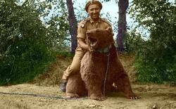 Wojtek: Chú gấu nghiện bia được lấy làm biểu tượng trên huy hiệu của lực lượng pháo binh Ba Lan