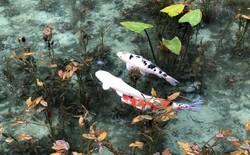Nếu đến Nhật Bản, đừng quên ghé thăm hồ nước trong vắt, đẹp như bức tranh thủy mặc này