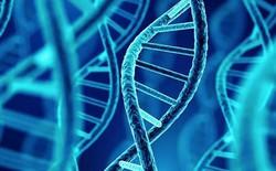 Với việc 1 gram ADN lưu trữ được tới 10 triệu gigabyte dữ liệu, các nhà khoa học dự định sử dụng ADN thay thế cho các máy chủ