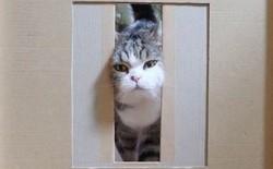 """YouTuber Nhật Bản bày trò """"lách qua khe cửa hẹp"""" cho 2 boss mèo để xem chúng có phải một loại chất lỏng hay không"""