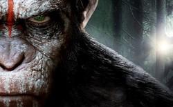 Nếu loài người bị diệt vong, liệu tinh tinh có tiếp tục tiến hóa để trở thành loài người hay không?