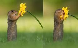 Những hình ảnh về một chú sóc ngửi hoa sẽ 'đốn tim' bạn ngay tức thì