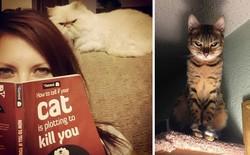 Khoa học chứng minh: Loài mèo không hề vô tâm, trái lại còn tình cảm với người hơn cả chó
