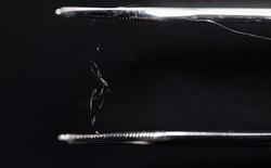 Tơ nhện nhân tạo có thể thay thế nhựa trong tương lai