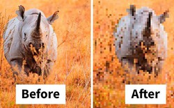 Sự thật đáng buồn về 22 bức tranh của các loài động vật có số lượng pixel tương ứng với số cá thể còn sống