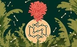 Sự sống đầu tiên trên Trái Đất đã hình thành như thế nào? Tại sao toàn bộ sinh vật chỉ cấu thành từ 20 amino axit?