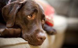 """Quá trình tiến hóa đã ban tặng cho chó đôi mắt long lanh, để giờ chúng """"làm nũng"""" chúng ta thế này đây!"""