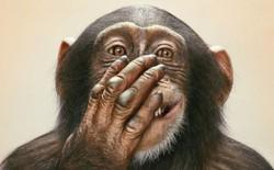 Thế giới động vật hóa ra cũng toàn những mưu mô lừa lọc mà chúng ta không thể ngờ tới