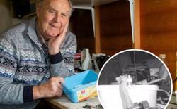 Như phim Disney: Ông lão phát hiện chú chuột nhỏ bí mật giúp mình dọn dẹp bàn làm việc mỗi đêm