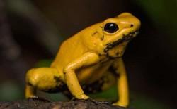 15 sinh vật có nọc độc đáng sợ nhất trên Trái Đất