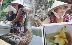 Câu chuyện kỳ lạ về tình mẫu tử của người phụ nữ bán trái cây và chú vịt biết làm nũng ở Sài Gòn