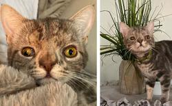 Không chỉ riêng con người, mèo cũng bị mắc hội chứng Down