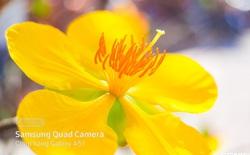 """Dành cho hội yêu hoa, ngắm hoa, chụp hình hoa Tết thế này mới là """"chân ái"""" sành điệu"""