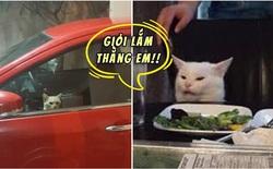 """Bị nhốt trong ô tô nhà hàng xóm, chú mèo nhanh trí bật luôn đèn cảnh báo nguy hiểm để gọi """"sen"""" cứu giúp"""