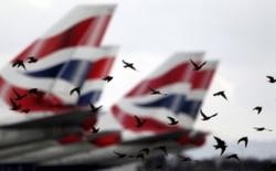 Điều gì sẽ xảy ra khi những chú chim lao vào bên trong động cơ máy bay?