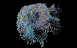 Google công bố bản đồ độ phân giải cao lớn nhất từng có về hoạt động của não bộ