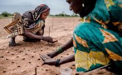 Làm nông nghiệp sạch, bền vững là chìa khóa để nuôi sống hàng tỷ người nhưng không gây hại cho hành tinh