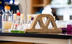 """Khoa học tạo ra """"gạch sống"""": những viên gạch biết quang hợp, hấp thụ CO2, sinh sản được mà vẫn cứng cáp như thường"""