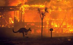 Giải thích nhanh về đại thảm họa cháy rừng đang diễn ra tại Úc nếu bạn lười theo dõi