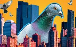 Đông đến mức không thể chịu nổi: Chim bồ câu đã xâm chiếm toàn bộ các thành phố của Mỹ như thế nào?