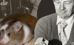 Thành phố chuột: Thí nghiệm động vật ghê rợn nhất từng được thực hiện, sự diệt vong của bầy chuột gợi mở suy ngẫm về tương lai nhân loại
