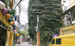 Ngắm ngôi nhà 5 tầng phủ kín cây hoa giấy của nguyên giảng viên Đại học Xây dựng Hà Nội, ai đi qua cũng sững sờ