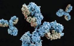 Phát hiện kháng thể có khả năng vô hiệu hóa virus SARS-CoV-2