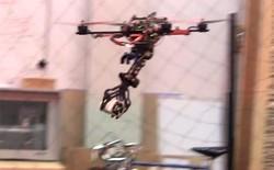 Robot săn mồi lấy cảm hứng từ đại bàng