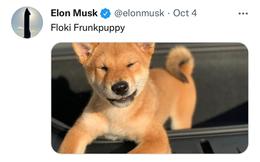 Như chưa hề tăng, Elon Musk vừa tweet 'tôi không sở hữu đồng Shiba Inu nào', ngay lập tức giá 'coin chó' giảm