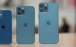 Chiến lược iPhone giá rẻ rất thành công, Apple dự định ra mắt một chiếc iPhone màn hình lớn có giá dưới 900 USD