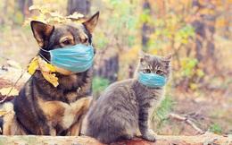 Các nhà khoa học phát hiện mèo dễ bị mắc COVID-19 hơn chó, nhưng các 'con sen' chớ nên hoảng sợ vì lý do sau đây