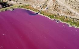 Đang yên đang lành, một đầm phá ở Argentina bỗng nhiên chuyển sang màu hồng