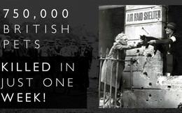 """Kinh hoàng vụ thảm sát vật nuôi năm 1939 ở Anh: 750.000 thú cưng bị """"hóa kiếp"""" chỉ trong 1 tuần"""
