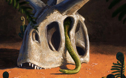 """""""Qua mặt"""" khủng long và thiên thạch hơn 60 triệu năm trước, loài rắn vẫn sống đến ngày nay như thế nào?"""