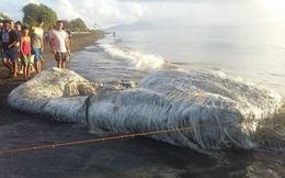 """10 sinh vật kỳ dị được biển cả """"freeship"""" vào đất liền"""