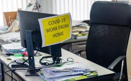 Những phần mềm giúp bạn quản lý và lên kế hoạch từ xa cho nhóm làm việc của mình