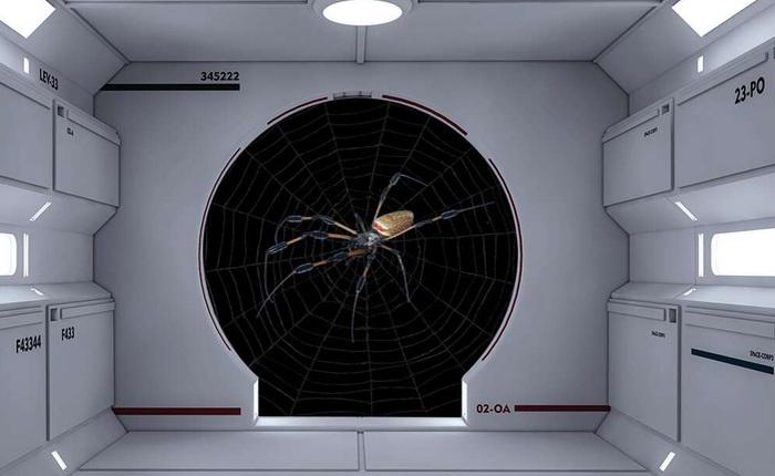 Cũng là mạng nhện, nhưng mạng nhện vũ trụ khác gì mạng nhện Trái Đất?