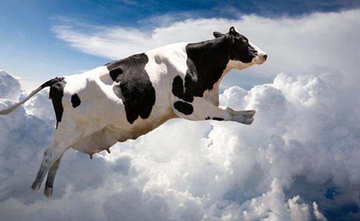 Mẩu tin giả hết sức kỳ khôi được ghi cả trên báo New York Times: Bò rơi từ trên trời xuống, làm đắm tàu đang đi biển