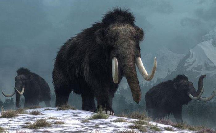 Người tiền sử xây nhà sống qua Kỷ băng hà từ xương quái thú khổng lồ đã bị tuyệt chủng?
