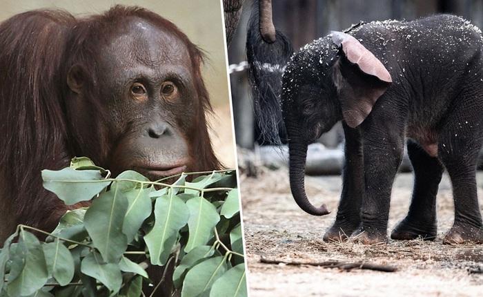 Động vật trong sở thú đang cảm thấy cô đơn khi thiếu vắng khách tham quan vì Covid-19