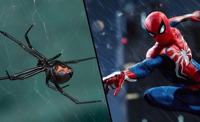 3 cậu bé để cho nhện góa phụ đen cắn, vì nghĩ rằng sẽ trở thành Spider Man