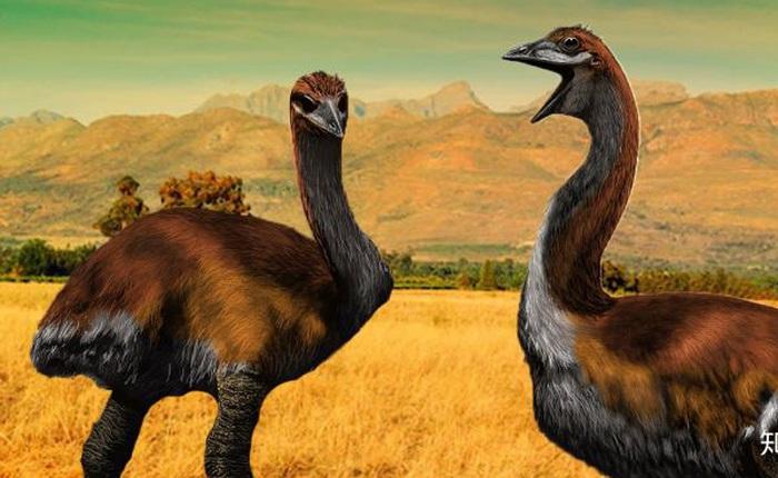Madagascar phát hiện ra loài chim khổng lồ đầu tiên trong lịch sử có độ cao lên tới 3 mét
