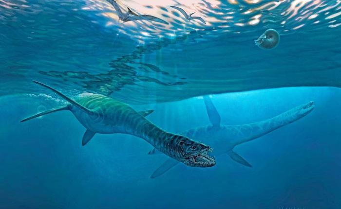 Các nghiên cứu phát hiện ra rằng những con thằn lằn cổ rắn thời tiền sử có khả năng lặn tương tự với cá nhà táng hiện đại