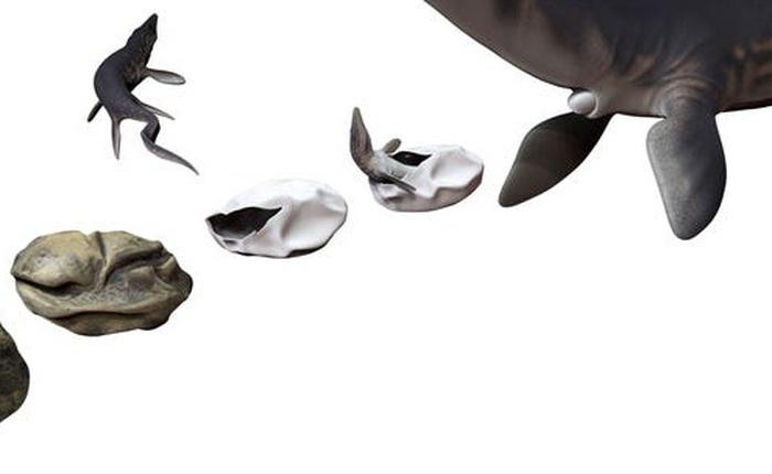 Phát hiện trứng hóa thạch lớn nhất trong thời đại khủng long, nó có thể đến từ một loài bò sát cổ đại chuyên ăn thịt cá mập